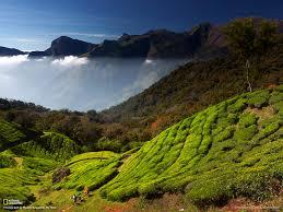 kerala plantations