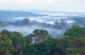 Le foreste alle multinazionali