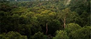 Propuesta ecuatoriana de Emisiones Netas Evitadas (ENE)