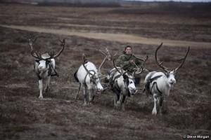 Un Natale di minacce ai popoli delle renne