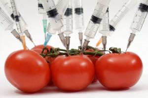 """Alimentos orgánicos para los ricos,  """"transgénicos"""" para los pobres"""