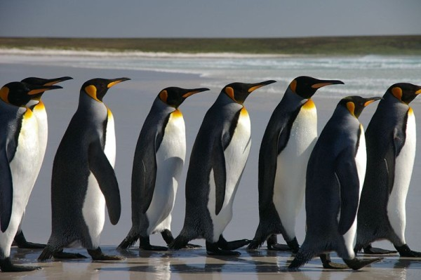 We need to talk about… the Falklands