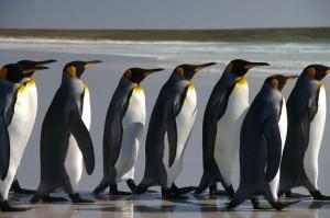Necesitamos hablar sobre… las Falklands