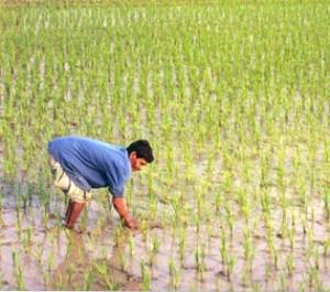 Les dix géants de l'agroalimentaire négligent les droits de millions de personnes