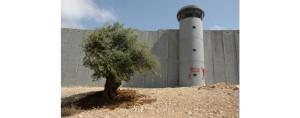 Progetto di affido a distanza di bambine/i palestinesi di Gaza