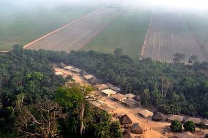 Il faut arrêter d'accaparer les terres pour produire des biocarburants