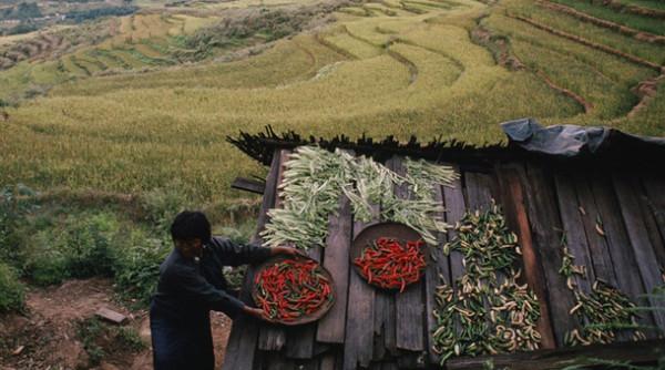 Bután, el primer país del mundo en permitir sólo la agricultura ecológica