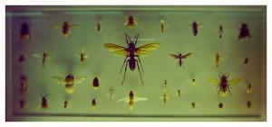 ¿Comer insectos para acabar con el hambre?