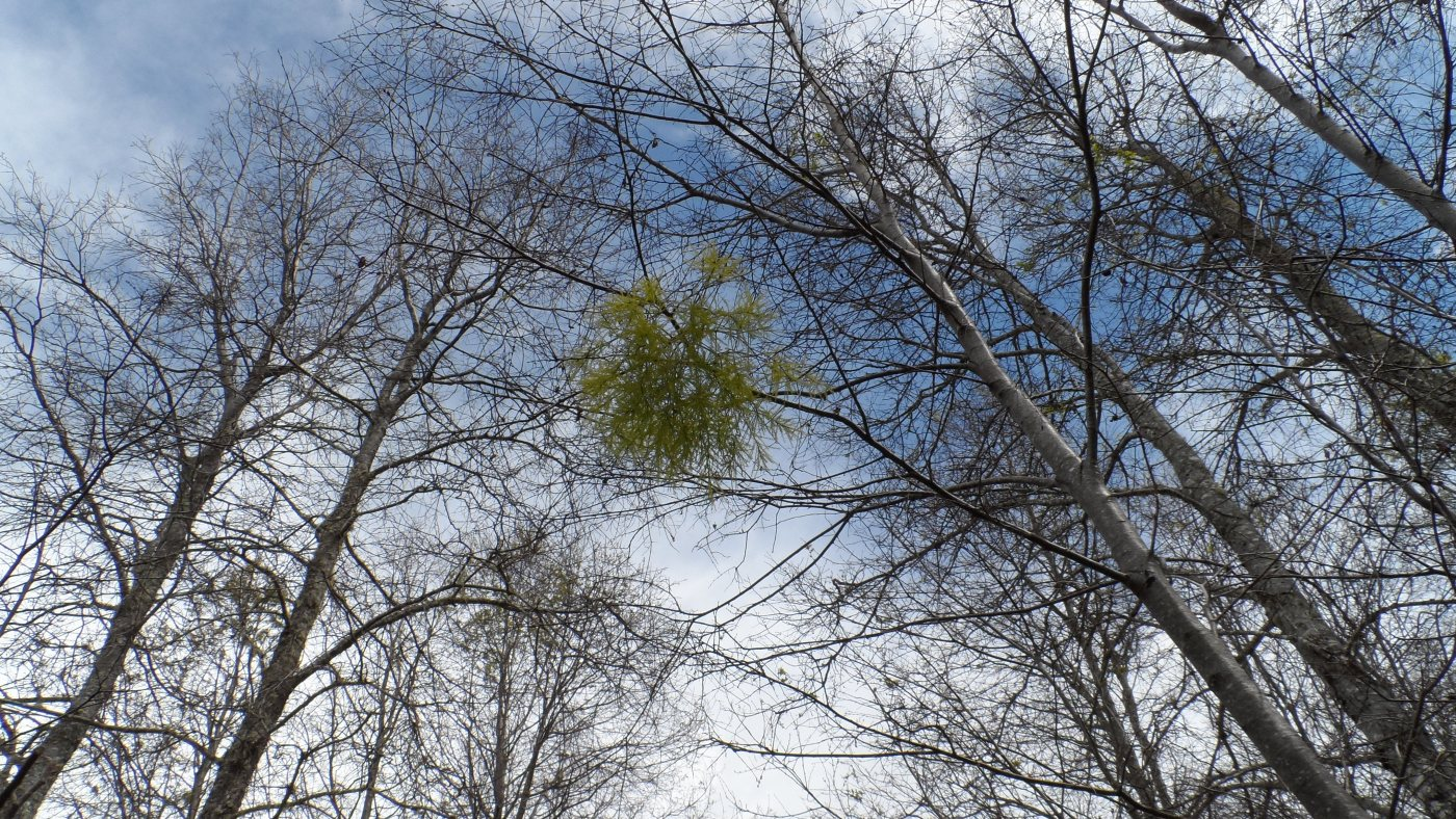 el bosque el cielo