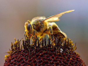 World Bee Day | 20 May