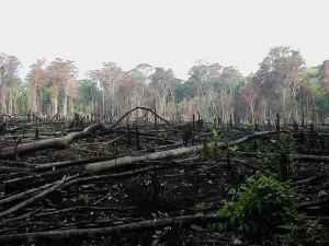 Non à la Compensation Biodiversité !