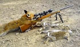 De Pernambuco para o Brasil, o caçador de raposas?