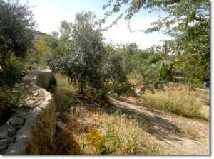 Faire reverdir le désert : la permaculture en Jordanie