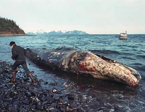 Shell, Exxon, BP y Chevron: responsables de daños ambientales