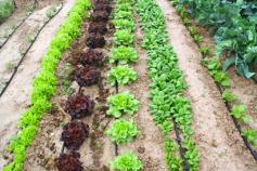 Qu'est-ce que la souveraineté alimentaire ?