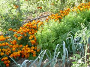 Les jardiniers d'Ile de France s'empoisonnent-ils en cultivant leurs potagers ?