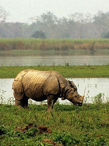 Debating rhino de-horning in Assam