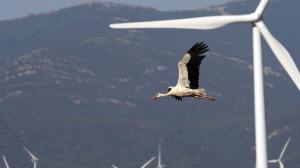 Casi 20.000 palas de molinos de viento averiadas amenazan con un desastre ecológico