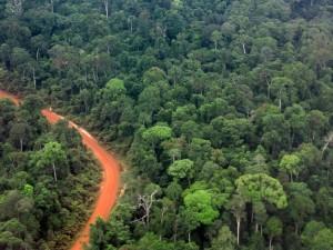 Amazon rainforest survey could improve carbon offset schemes
