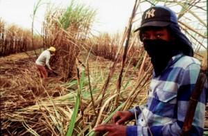 Schiavitù moderna: organizzazione spinge per l'implementazione di norme sul lavoro forzato