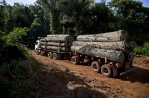 Greenpeace: indagine sull'industria del legname amazzonico