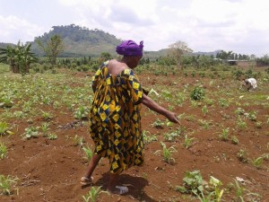 Small Farmers' Loss of Land Increases World Hunger