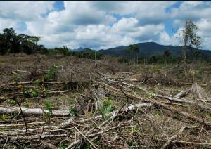 Poder indígena vs. narco deforestación