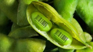 México: Anulan permiso que permitía la siembra de soya transgénica a Monsanto