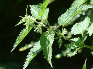Les préparations naturelles ne sont plus considérées comme des pesticides