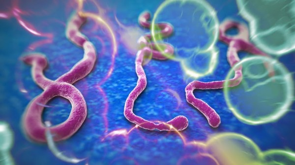 """WHO issues """"roadmap"""" to scale up international response to the Ebola outbreak in West Africa"""