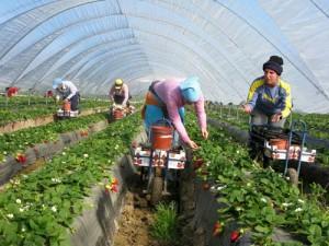 L'agriculture biologique prise au piège de la grande distribution
