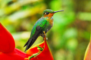 Benefits of Investing in Protection of Biodiversity Outweigh Financial Costs — Report