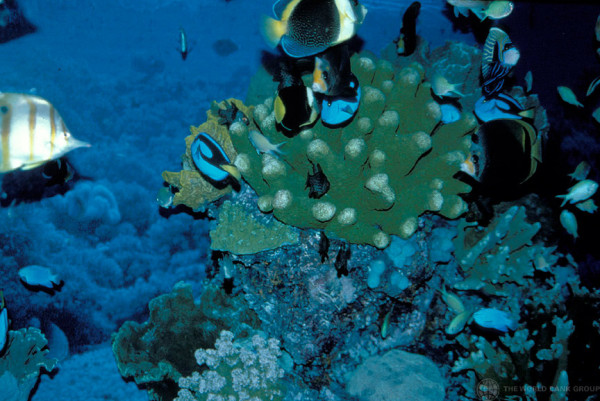 'Global Economy to Lose $1 Trillion Annually Without Action to Stop Ocean Acidification'