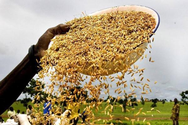 Il mondo spreca una quantità di cibo che potrebbe sfamare 2 miliardi di persone