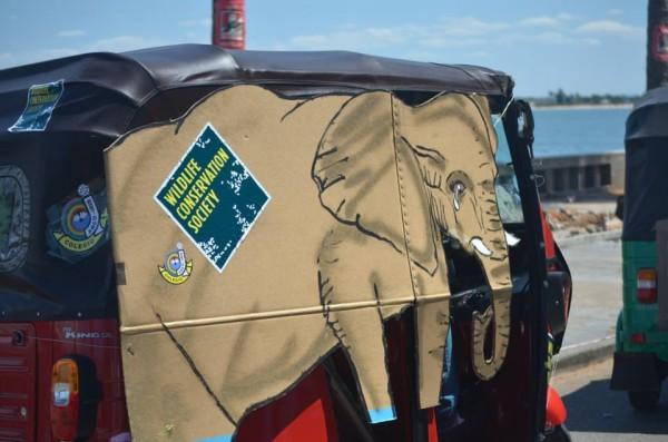 Marcha_elefantes_9