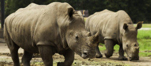 World Marches to Demand an End to Illegal Trade in Wildlife
