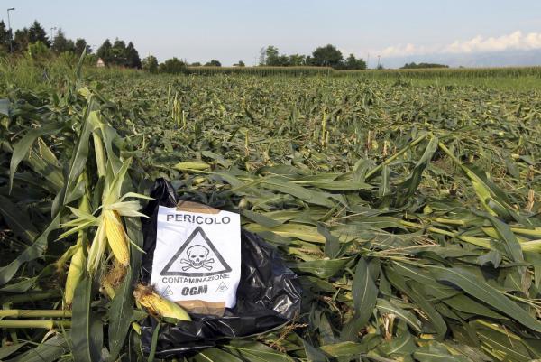 Aprire agli OGM? No grazie!!