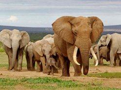 Apoyo financiero a proyecto en Vietnam para preservar elefantes