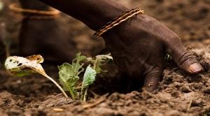 FAO: al via l'Anno Internazionale dei Suoli 2015