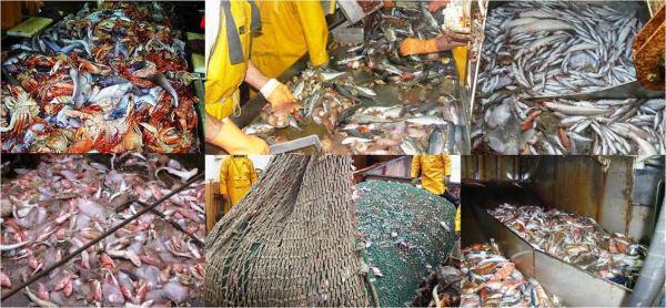 Defaunación marina, extinción masiva de especies oceánicas