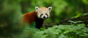Worldwide Mission to Assess the Planet's State of Biodiversity and Ecosystems