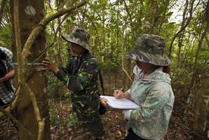 Nel periodo 2001-2015 calano le emissioni di carbonio da foreste