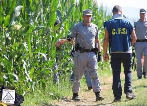 Renzi sopprime il Corpo Forestale, ecomafie e OGM ringraziano