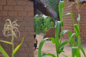 Centrafrica: gli agricoltori necessitano di aiuti urgenti
