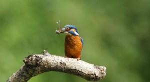 Loi biodiversité et compensation écologique : vers la privatisation de la protection de la nature ?