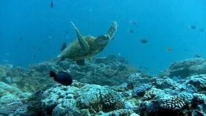 Cinque cose da sapere sullo stato di salute della Grande Barriera Corallina