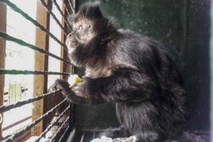 Ambientalistas lograron desarmar el zoológico de Chubut