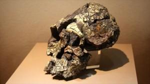 Descubren en Kenia herramientas homínidas de 3,3 millones de años