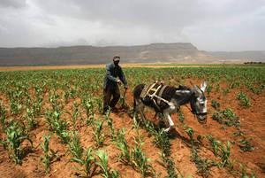 Yemen, FAO: Milioni in condizioni di insicurezza alimentare con l'inasprirsi del conflitto