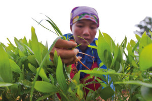 Women and Biodiversity Feed the World, Not Corporations and GMOs